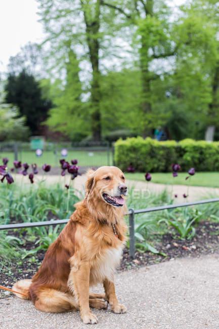 Portrait of a cute dog sitting in a park — Fotografia de Stock
