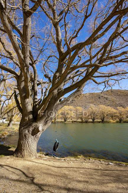 Tyre swing hanging on a tree, Lake Benmore, South Island