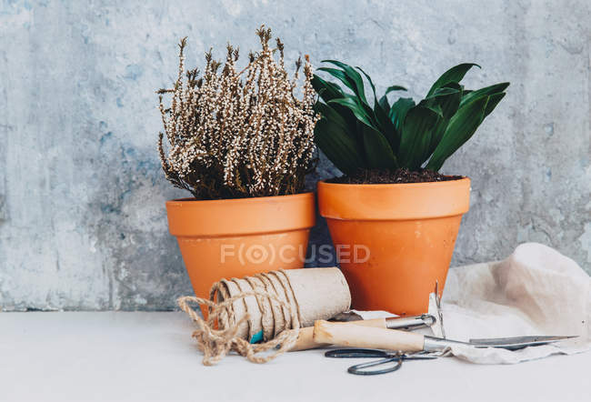 Plant pots with gardening tools — Stock Photo