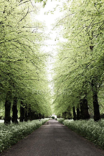 Scenic view of Incidental people walking along a treelined path, Untied Kingdom — Stock Photo
