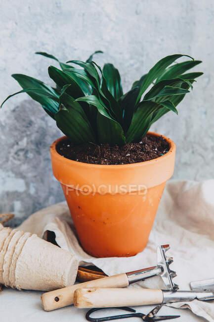 Primo piano vista della pianta pentola con attrezzi da giardinaggio — Foto stock