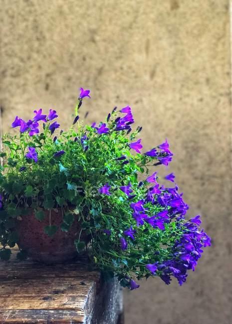 Улучшенный вид цветов в горшке для растений — стоковое фото