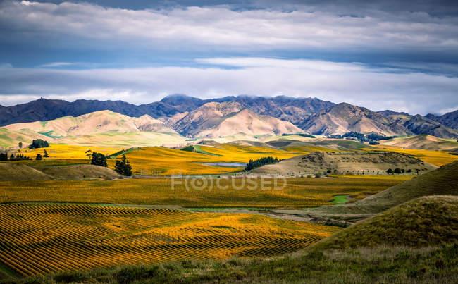 Vue panoramique sur le paysage rural avec vignobles, Nouvelle-Zélande — Photo de stock
