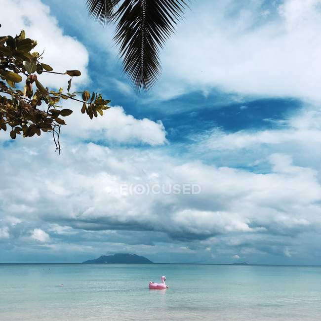 Scenic view of Inflatable flamingo floating in ocean, Seychelles — Stock Photo