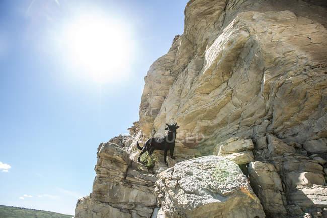Cão que está em um penhasco, Wyoming, América, EUA — Fotografia de Stock