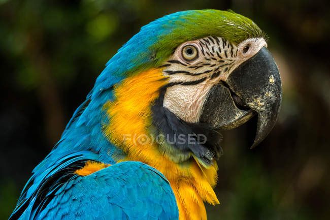 Портрет попугая на размытом фоне — стоковое фото