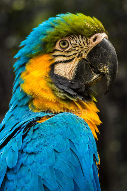 Portrait of a parrot, against blurred background — Stock Photo