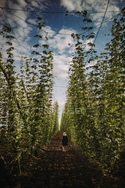 Femme marchant dans un champ de houblon, Serbie — Photo de stock