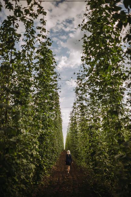 Женщина, идущая через хмелевое поле, Сербия — стоковое фото