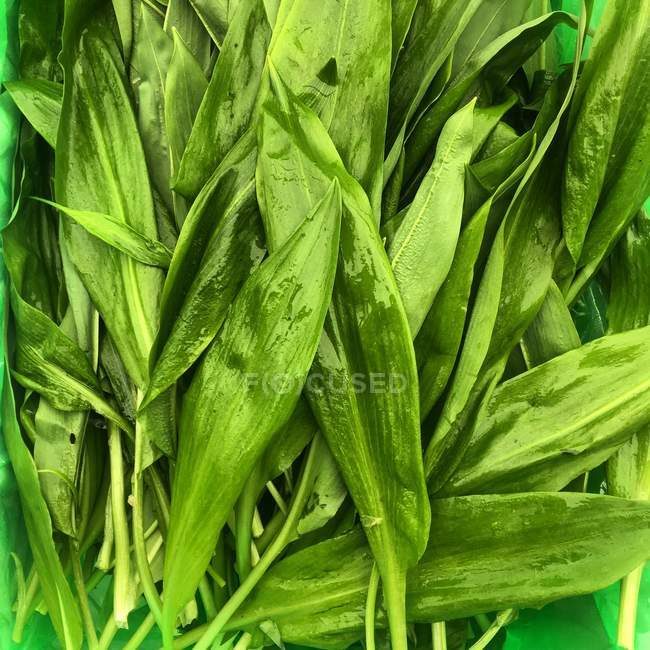 Close-up view of fresh wild garlic — Stock Photo