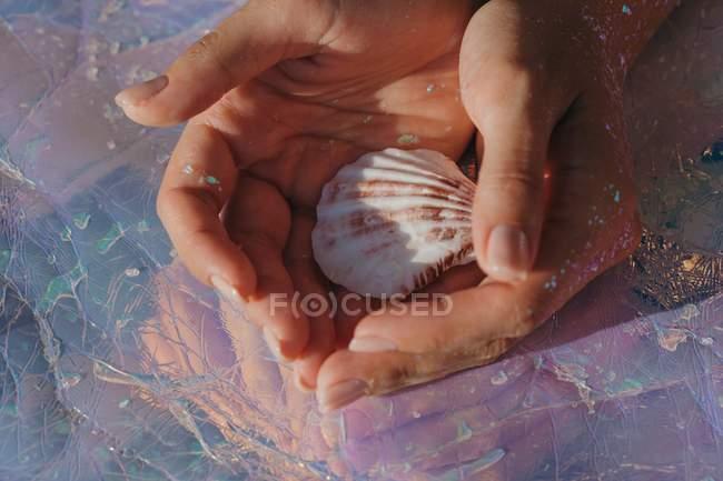 Крупним планом вид жінки руки тримає мушлі — стокове фото