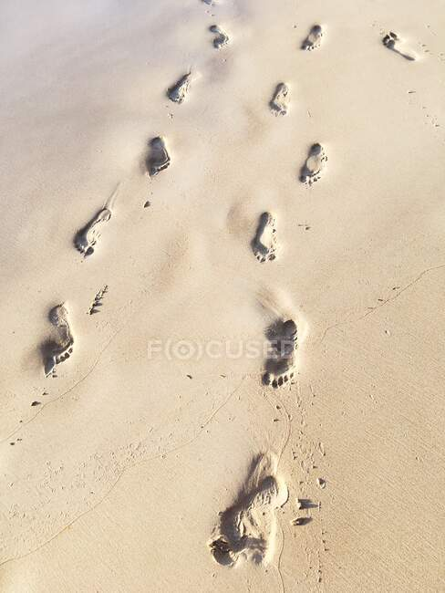 Scenic view of Footprints in the sand, Seychelles — Stock Photo