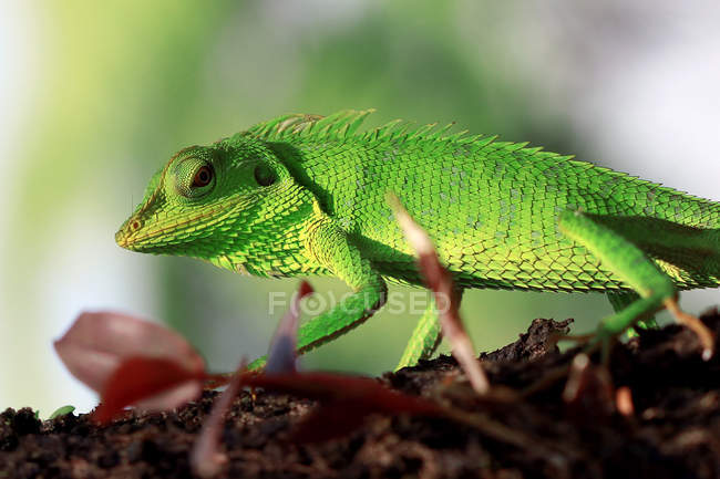 Lizard crawling on a tree, blurred background — Stock Photo