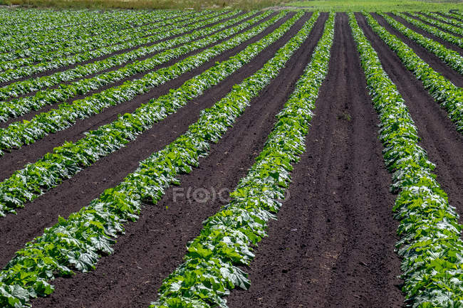 Scenic view of Plants growing on a farm, Canada — Stock Photo