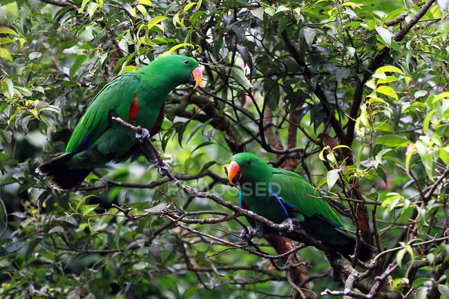 Dos loros en un árbol en la selva - foto de stock