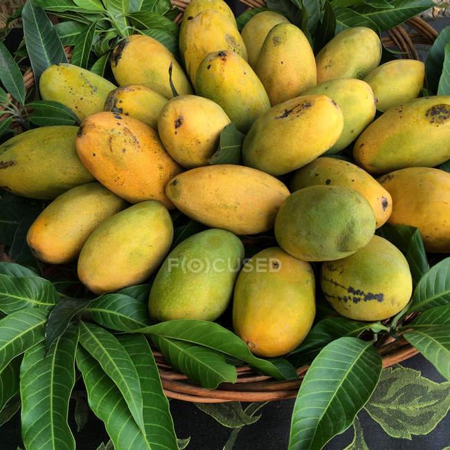 Корзина свежих манго, крупным планом вид — стоковое фото