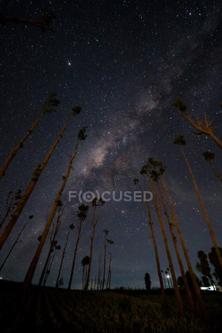 Scenic view of Milky way Above Trees, Indonesia — Stock Photo