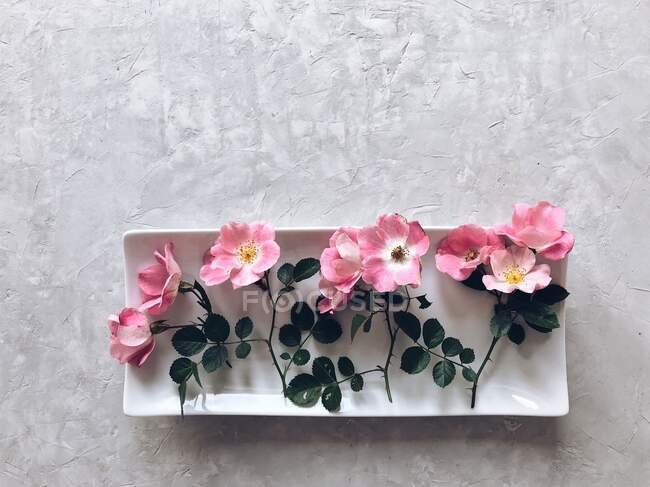 Closeup view of Pink roses on a white dish — Stock Photo