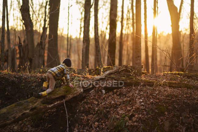 Rapaz rastejando ao longo de uma árvore caída na floresta, Estados Unidos — Fotografia de Stock
