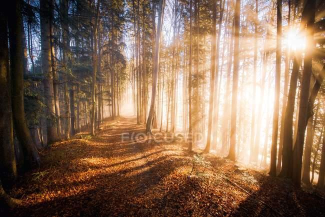 Осінній ліс туман, Зальцбург, Австрія — стокове фото