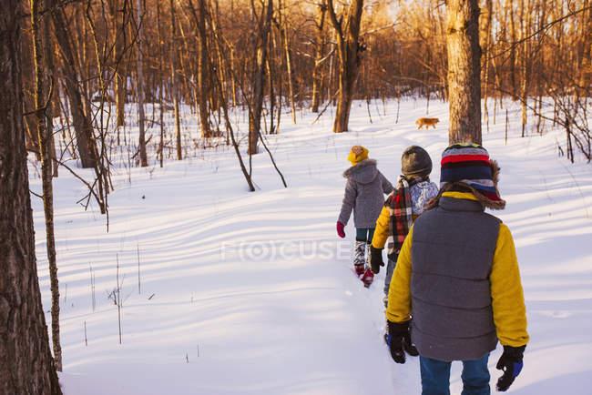 Três crianças andando através de uma floresta na neve com seu cão, Estados Unidos — Fotografia de Stock