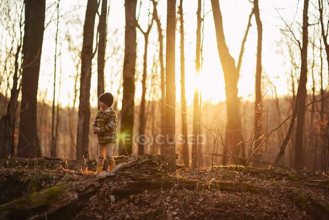 Niño de pie en el bosque en otoño, Estados Unidos - foto de stock