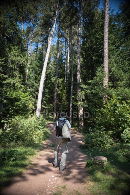 Вид сзади на человека, путешествующего в лес, Боснию и Герцеговину — стоковое фото