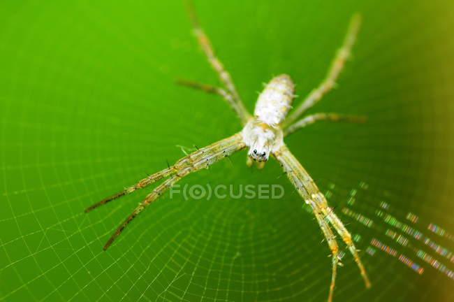 Plan rapproché d'une araignée sur une toile d'araignée, projectile macro sélectif de foyer — Photo de stock