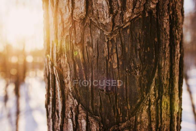 Vue rapprochée de la forme du cœur sculpté dans un tronc d'arbre, États-Unis — Photo de stock