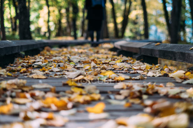 Scenic view of Autumn leaves on a wooden footpath, Belarus — Stock Photo
