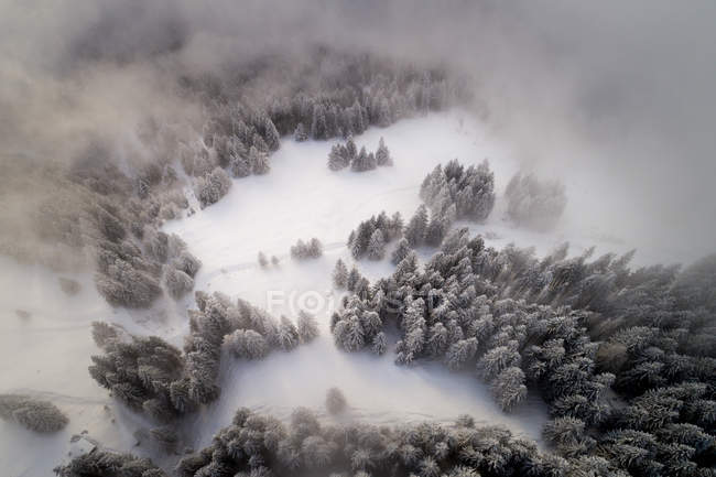 Aerial view of snow covered forest at sunset, Bavaria, Germany — Stock Photo