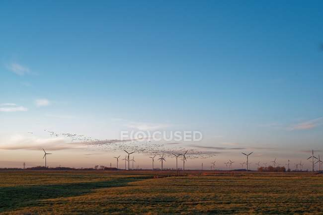 Barnacle geese flying over wind turbines, East Frisia, Lower Saxony, Germany — Stock Photo