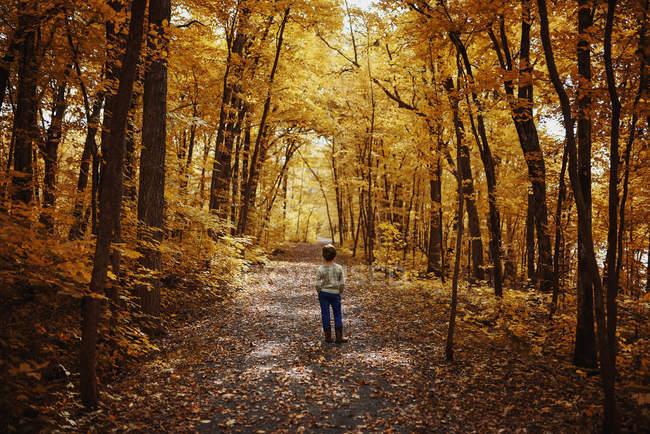 Niño de pie en un sendero en el bosque a principios de otoño, Estados Unidos - foto de stock