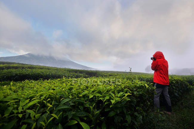 Rear view of a person taking a photograph in a tea plantation, Indonesia — Stock Photo