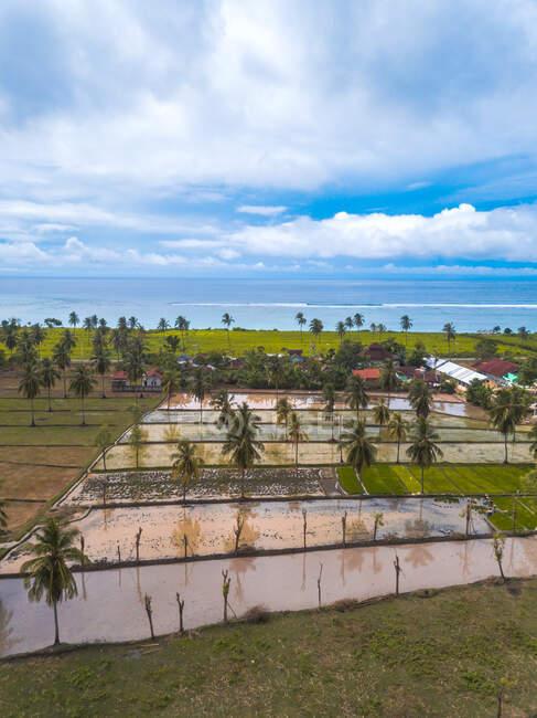 Campos de arroz inundados por la playa de Torok, Lombok, Indonesia - foto de stock