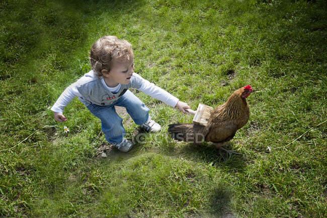 Chica de pie en un campo cepillando un pollo con un pincel, Polonia - foto de stock