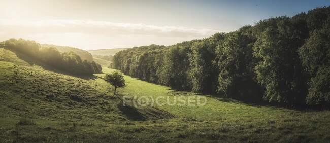 Paesaggio rurale, Lincolnshire, Inghilterra, Regno Unito — Foto stock