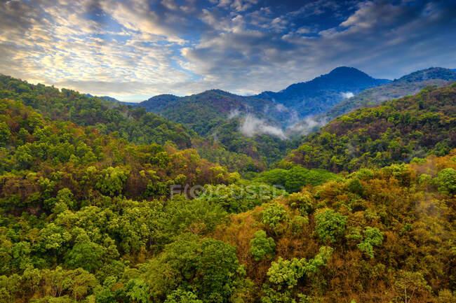 Bosque Semongkat, isla de Sumbawa, Nusa Occidental Tenggara, Indonesia - foto de stock