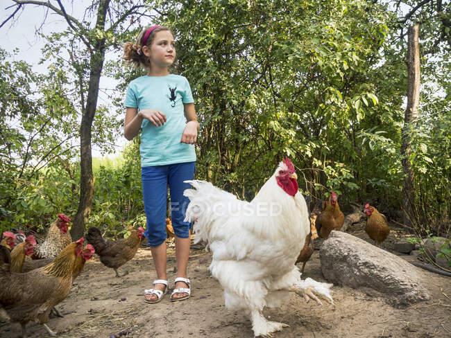 Menina entre galinhas e um galo, Polônia — Fotografia de Stock