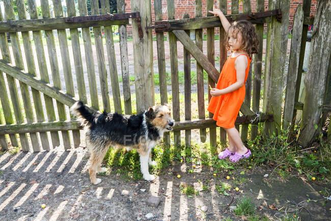 Девушка, стоящая в саду со своей собакой — стоковое фото
