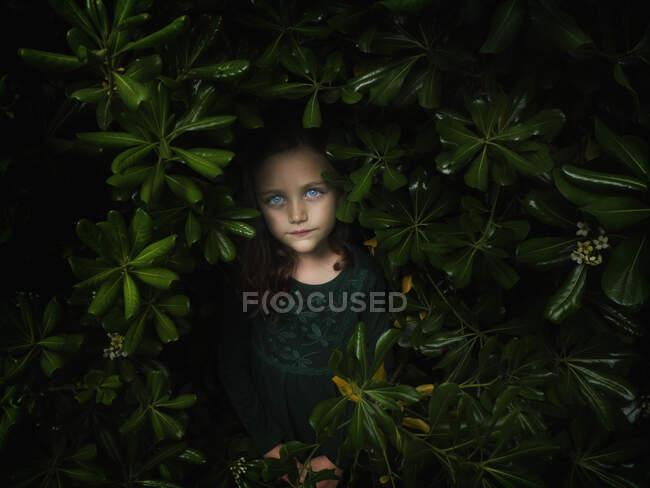 Retrato de una hermosa chica de pie entre arbustos - foto de stock