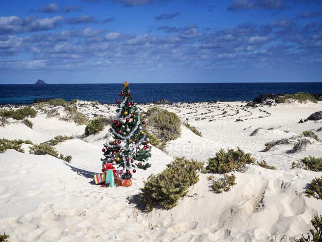 Árbol de Navidad con regalos de Navidad en la playa, Islas Canarias, España - foto de stock