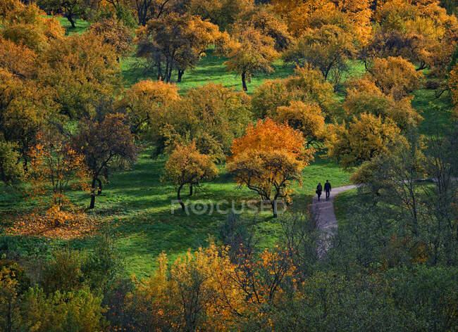 Передній вигляд пари, що ходить у парку (Вільнюс, Литва). — стокове фото