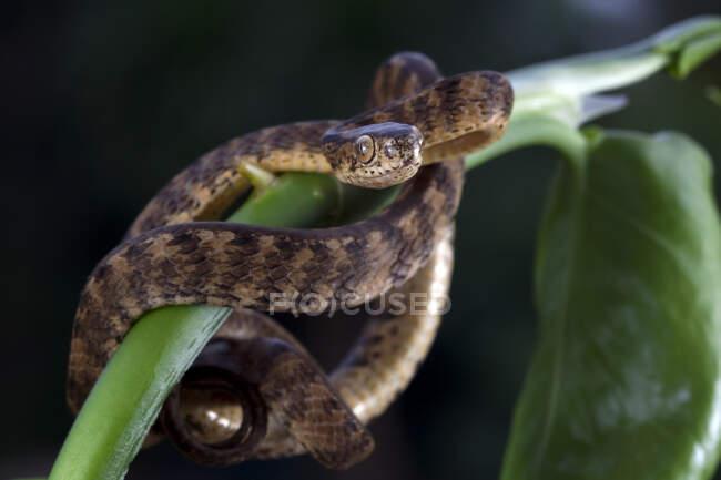Primer plano de una serpiente de babosa enrollada en una planta, Indonesia - foto de stock
