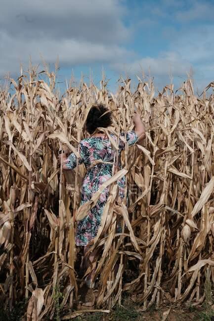 Vista trasera de una mujer caminando por un campo de maíz, Francia - foto de stock