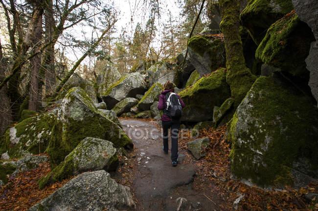 Vista posteriore di una donna che fa escursioni nel Parco Nazionale di Sequoia, California, USA — Foto stock