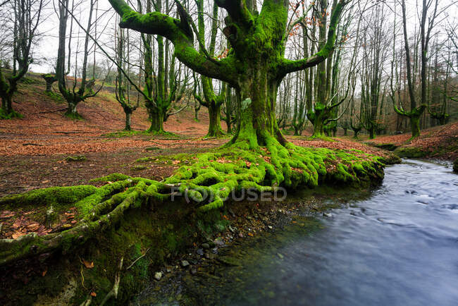 Lunga esposizione al Parco Naturale Gorbea, Alava, Spagna — Foto stock