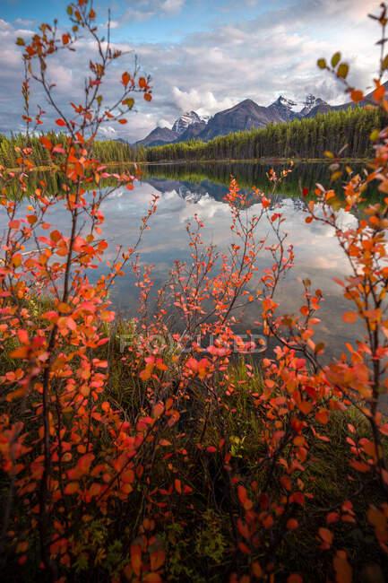 Листя червоної осені і гірські відбитки на Герберт Лейк, Банф національний парк, Канадські Скелясті гори, Альберта, Канада — стокове фото
