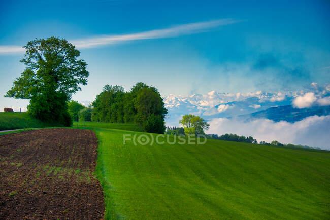 Сільські поля перед гірським ландшафтом Ремецвіль, Ааргау, Швейцарія. — стокове фото