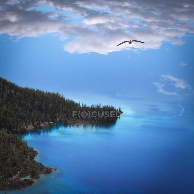 Чайка летить над прибережним пейзажем (США). — стокове фото